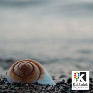 seashell with logo