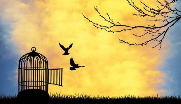 blog image: birds