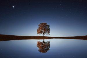 reflective tree