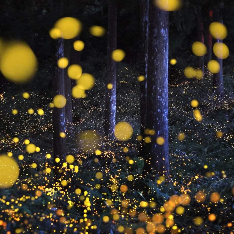 blog fireflies