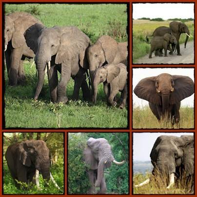 Bee Fences keep Elephants from the Crops and Villages