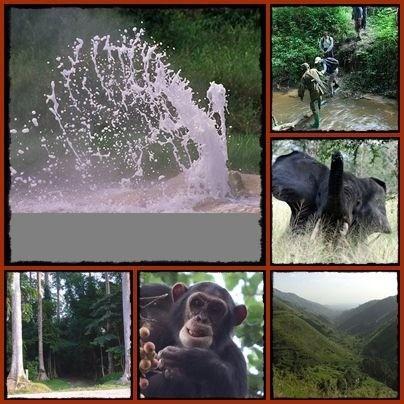 3 Day Semliki Valley Wildlife - Birding - Chimpanzee Safari