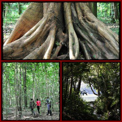 Explore Maramagambo Forest