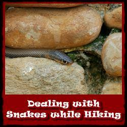 Dealing-with-snakes-while-hiking