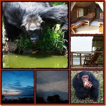 Ngamba Chimpanzee Island Sanctuary 2 day Safari