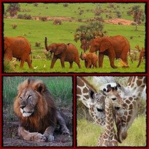 Top Lodging Choices in Murchison Falls Park