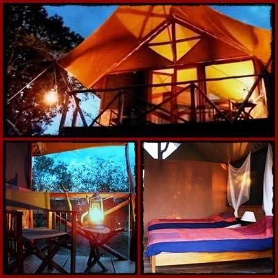 bush-safari-lodge.jpg