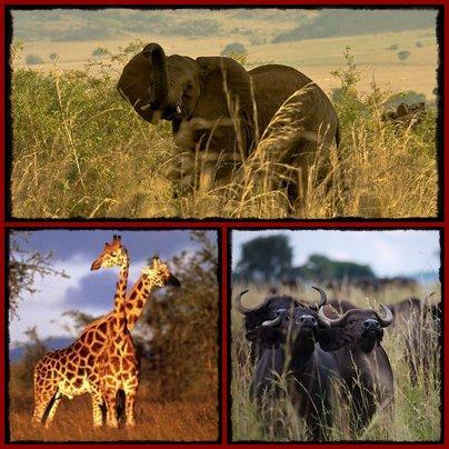 kidepo-valley-wildlife