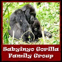 Sabyinyo-Gorilla-Group