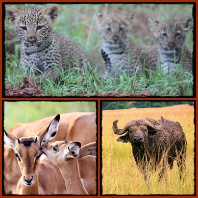 3 day Wildlife Safari in Akagera National Park - Rwanda