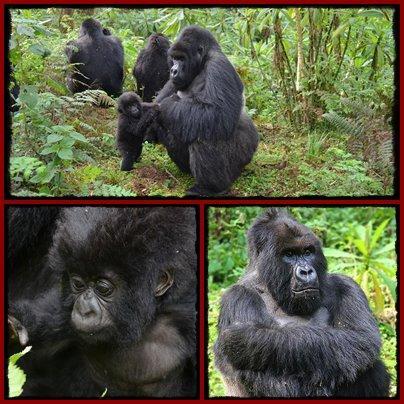 9 Day Gorilla - Chimpanzee Honeymoon Safari in Rwanda