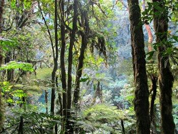 Nyungwe Forest National Park - Hiking Trails