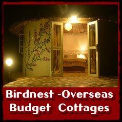 birdnest-overseas-link