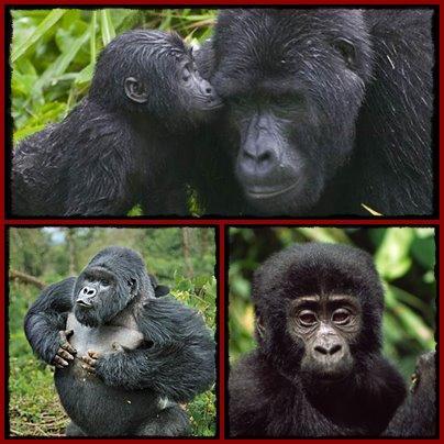 14-Day–Discover Uganda Gorilla - Chimpanzee Trekking Wildlife Safari