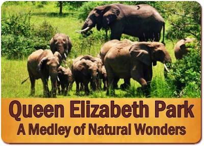 3 Day Fly-In Wildlife Safari Queen Elizabeth