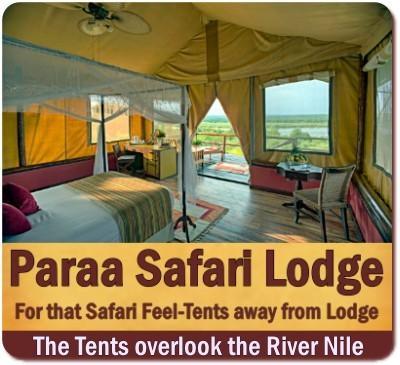 Paraa Safari Lodge - Best Location in Murchison Falls Park