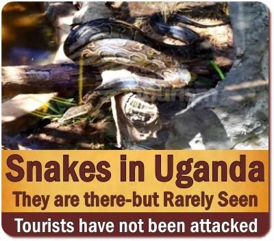 The Reptiles found in Uganda  - The Pearl of Africa