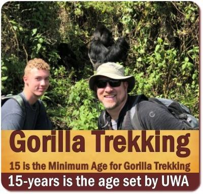Minimum Age for Gorilla Trekking
