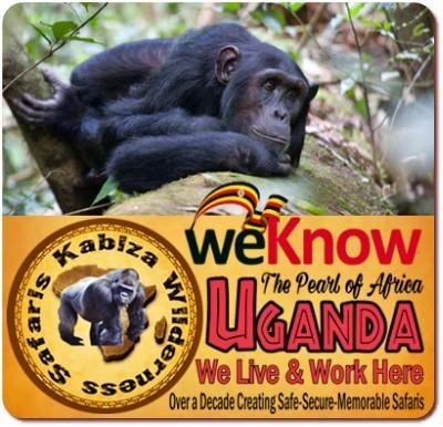 Best Chimpanzee Trekking Safaris in Kibale Forest