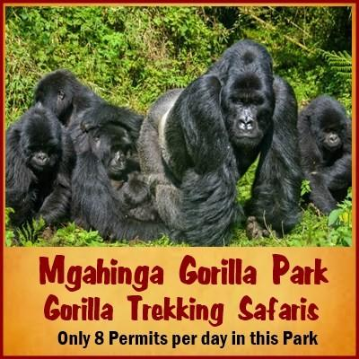 Getting to Mgahinga Gorilla Park from Kigali or Entebbe