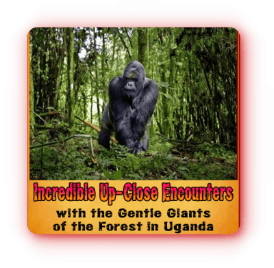 Private10-Day Luxury Discover Uganda Primate-Wildlife Safari