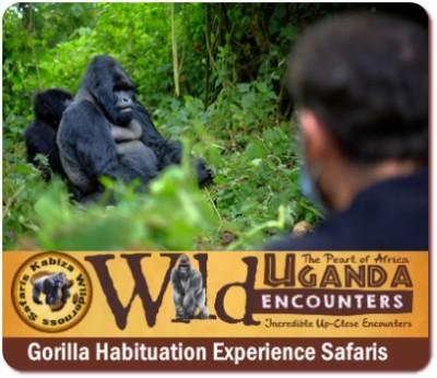 12 Day Ultimate Primate -Wildlife Honeymoon Safari in Uganda