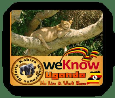 Best Queen Elizabeth Park Wildlife Safaris in the Pearl of Africa-Uganda