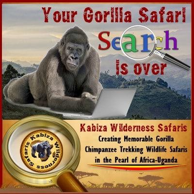 Gorilla Groups you can Trek