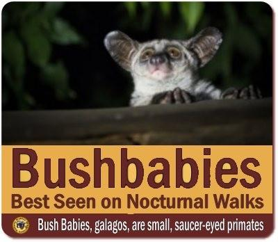 Nocturnal Forest Walk in Kibale Forest