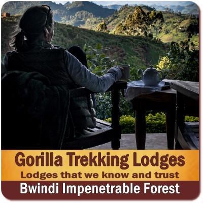 Straight Talk - Why is a Gorilla Trekking Safari So Expensive?