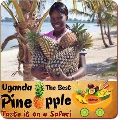 Ugandan Pineapples are simply the Best in the World