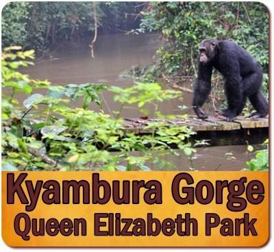 The Kyambura Gorge in Queen Elizabeth Park in Uganda