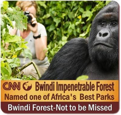 Comparing Gorilla Trekking in Bwindi Forest-Mgahinga Gorilla Park-Uganda