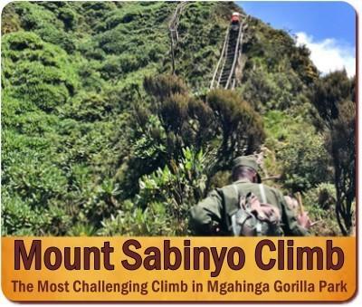 Climbing the Virunga Volcanoes in Mgahinga Gorilla Park in Uganda