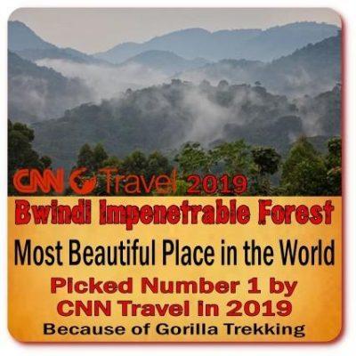 Twice-Gorilla Trekking -Hiking Safari
