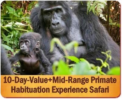 Best Primate Trekking Safaris in Uganda
