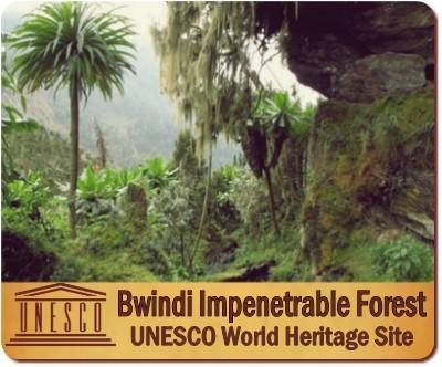 Hiking through  Bwindi Impenetrable Forest in Uganda