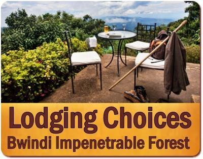 Luxury Gorilla Safari Honeymoon in Uganda- Bwindi Impenetrable Forest