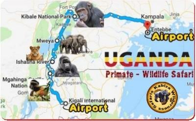 10-Day MORE TIME with the Primates Luxury Safari in the Pearl of Africa