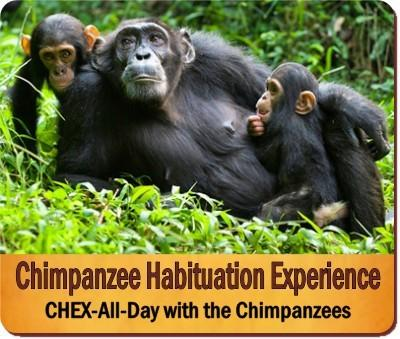 Value Plus 5-Day Gorilla-Chimpanzee Habituation Experience Safari in Uganda