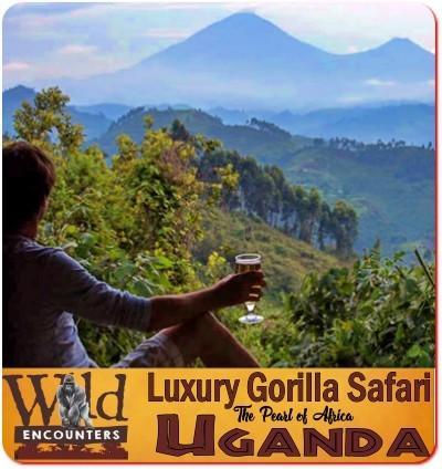 Luxury Twice Gorilla Trekking Safari