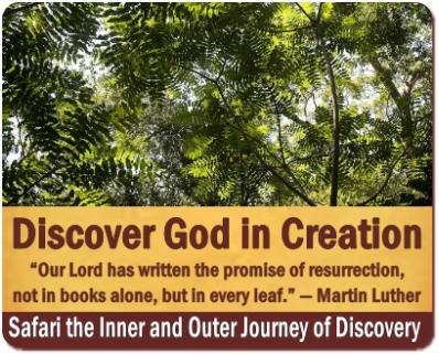 Discover the Creation of God on Safari in Uganda the Pearl of Africa