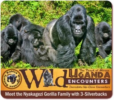 5-Day Luxury Fly-In Twice Gorilla Trekking Safari-Mgahiganga-Bwindi Forest