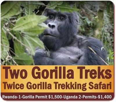 Twice Gorilla Trekking Safari