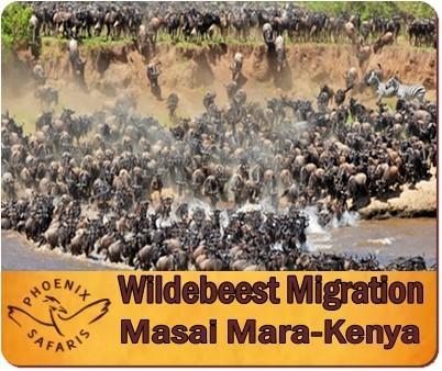 Combine Gorilla Trekking with the Great Migration in the Masai Mara