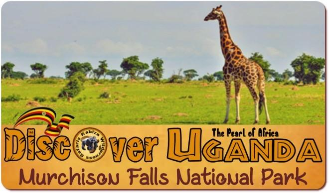 Best Murchison Falls Park Wildlife Safaris in the largest Park in Uganda