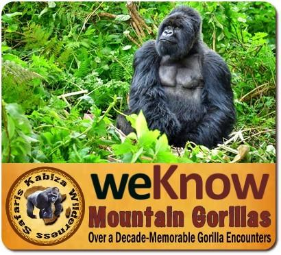 Affordable Gorilla Safaris in Uganda-where your Money Stretches Further