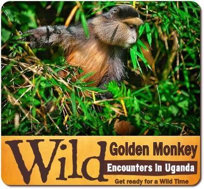 3-Day Gorilla Habituation Experience Safari- Bwindi Forest - Rushaga