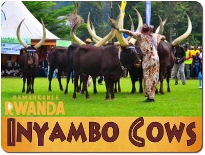 Discover Remarkable Rwanda-its Culture-Traditions-Heritage-a Way of Life
