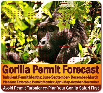 The Secret to Getting GORILLA PERMITS IN UGANDA